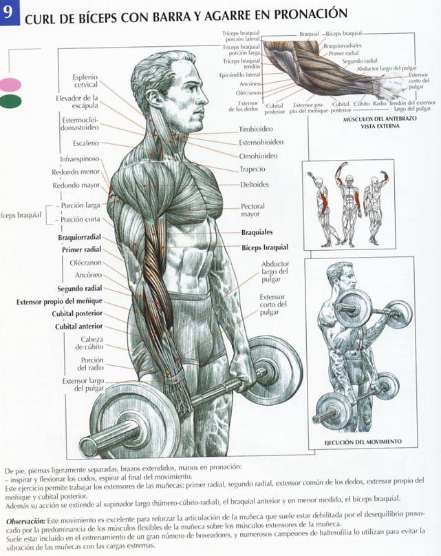 ejercicios aumentar volumen: